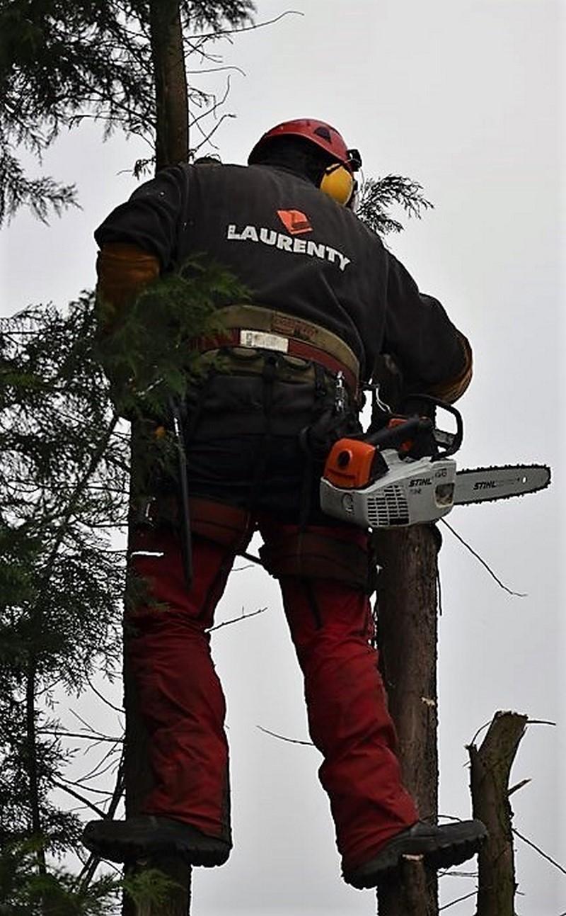 Elagage d'arbres avec Laurenty